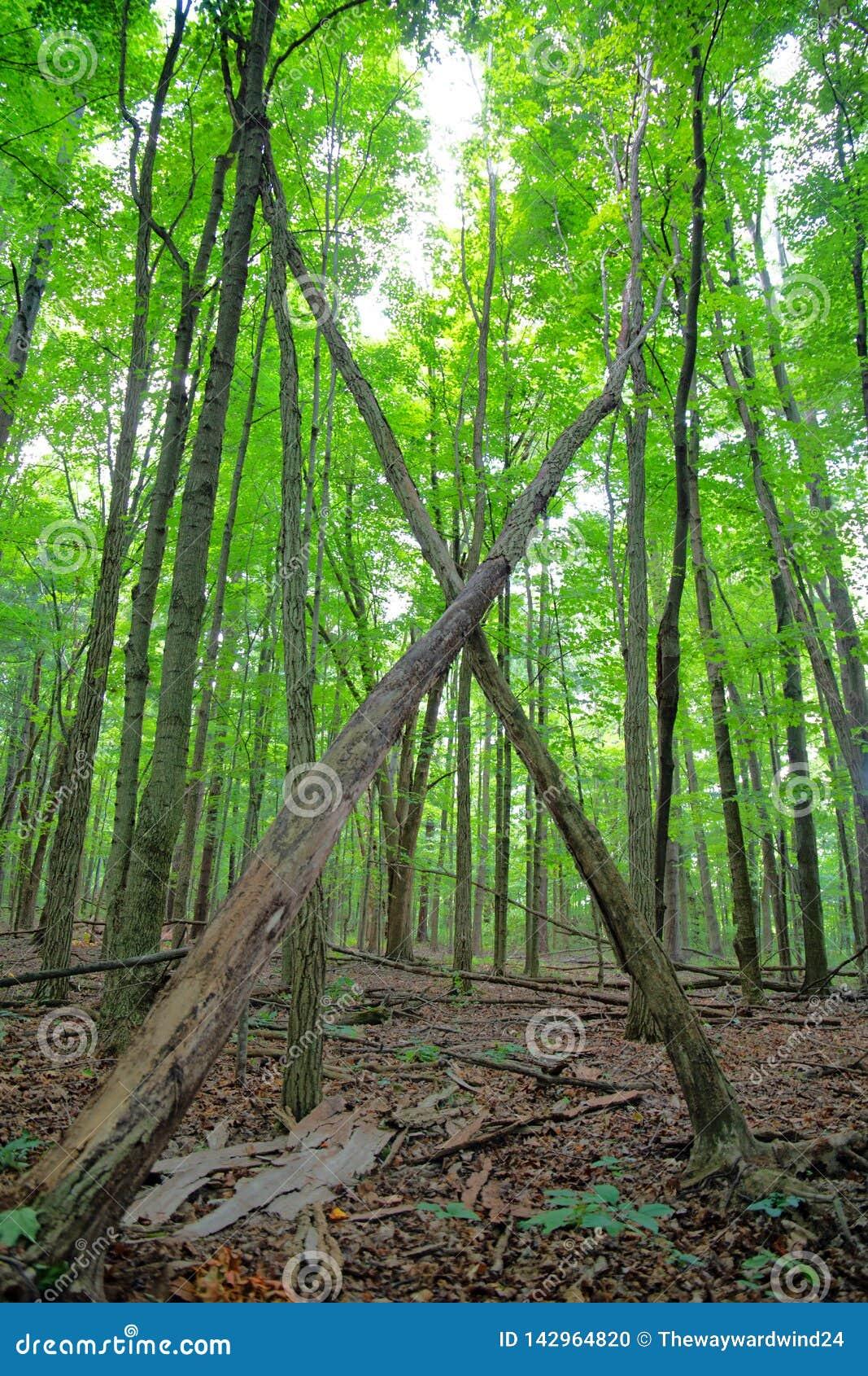 Щетка и сочный лес