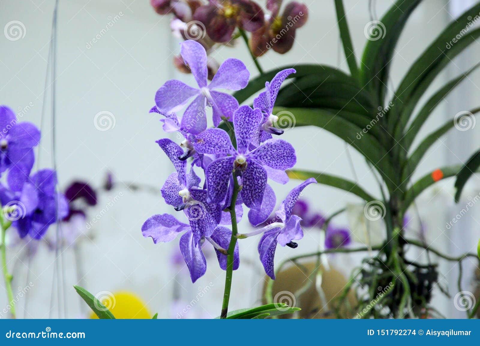 Экзотические орхидеи цветут внутри крытого питомника