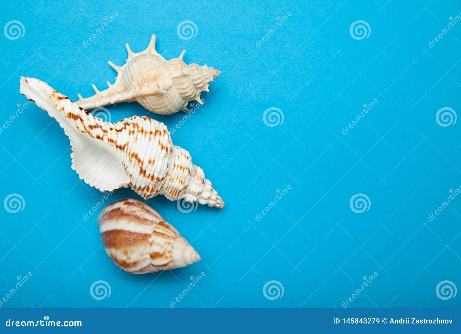 Экзотические раковины на голубой предпосылке, концепции летних отпусков r