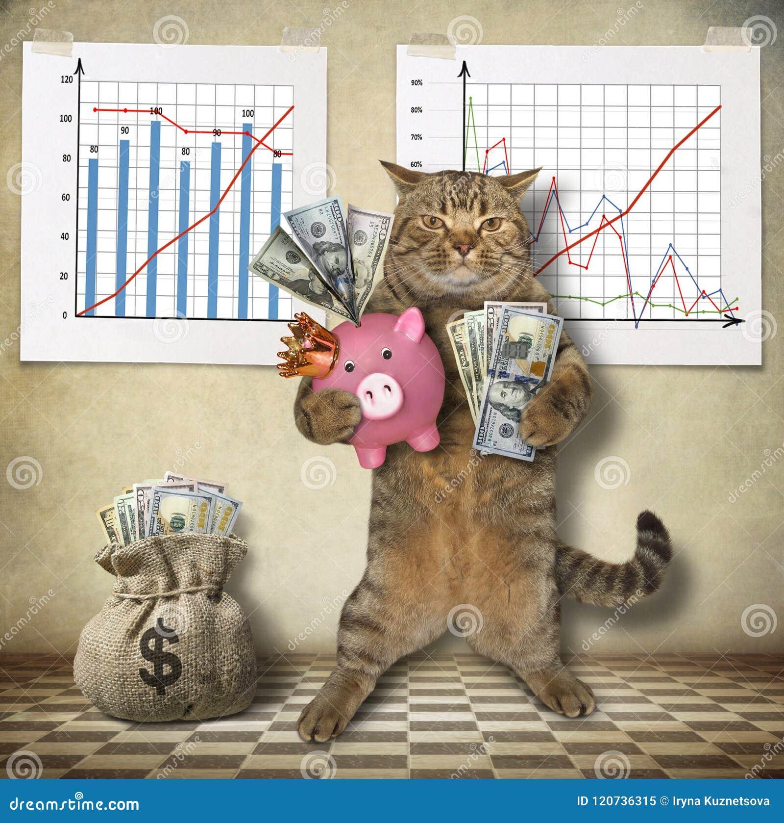 Экономист кота с копилкой