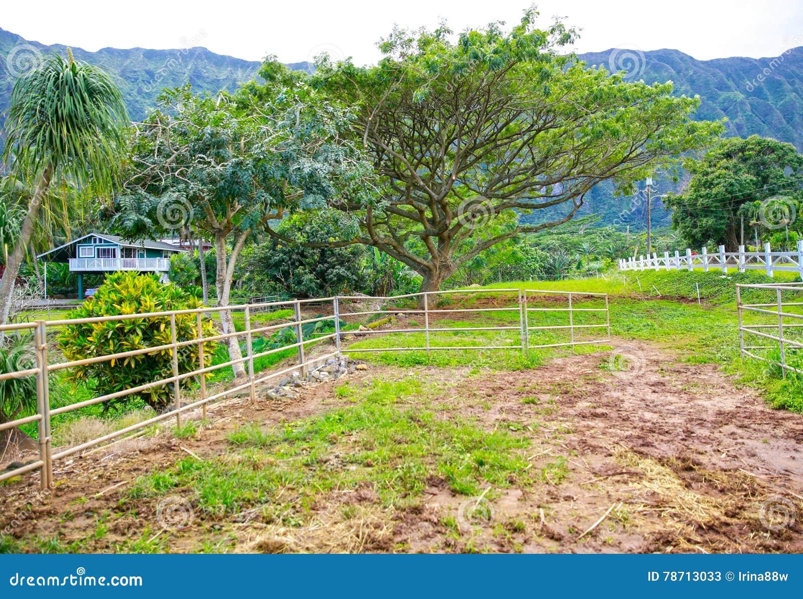 Экстерьер фермы лошади в Новой Зеландии