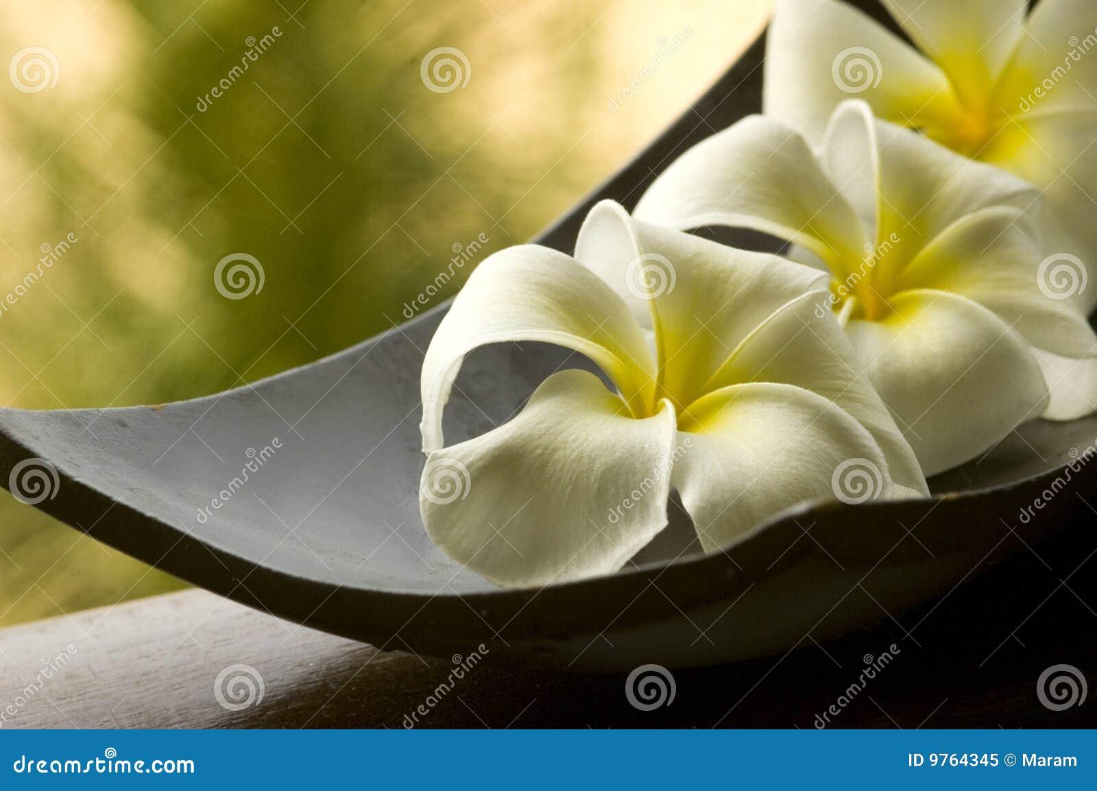 экстренныйый выпуск спы цветка