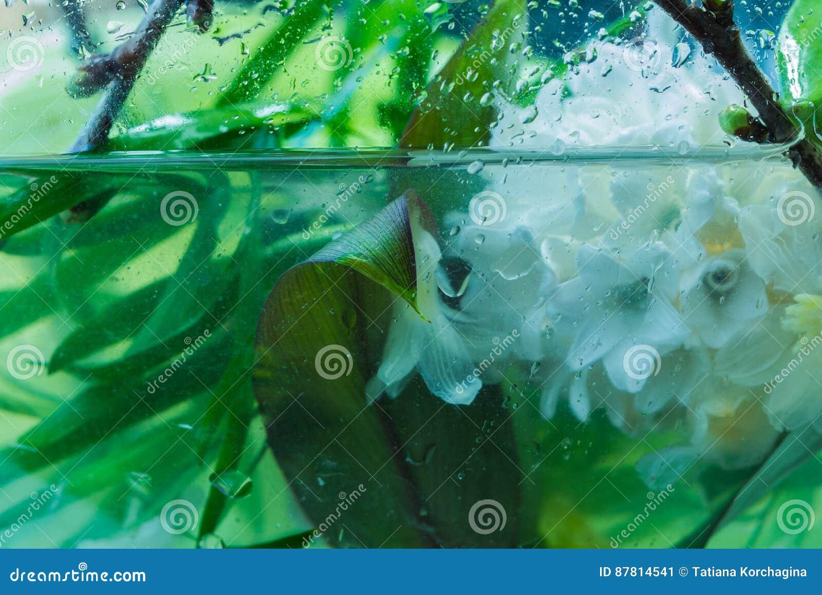 Экстренныйый выпуск цветет состав в воде