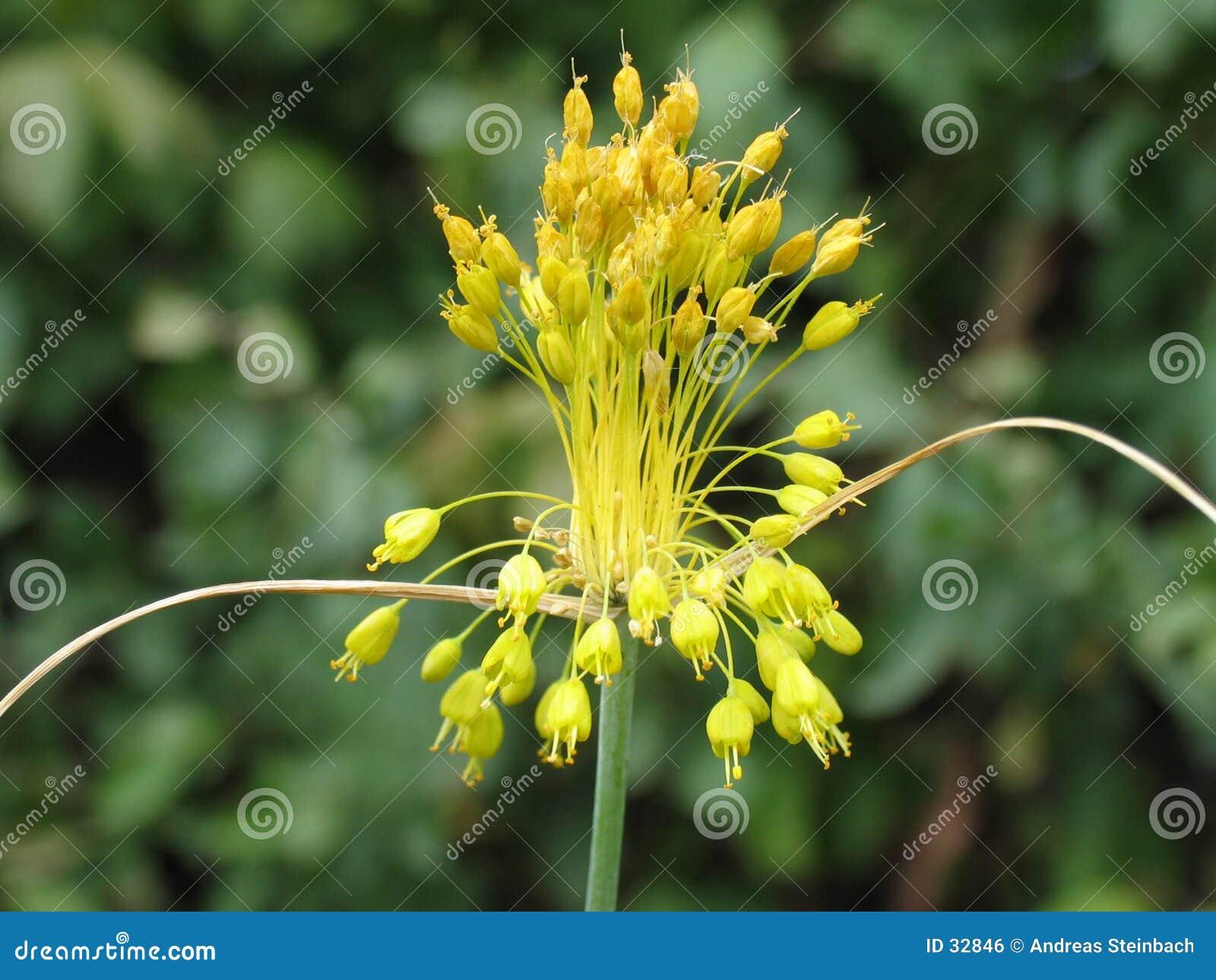 эксцентричный цветок