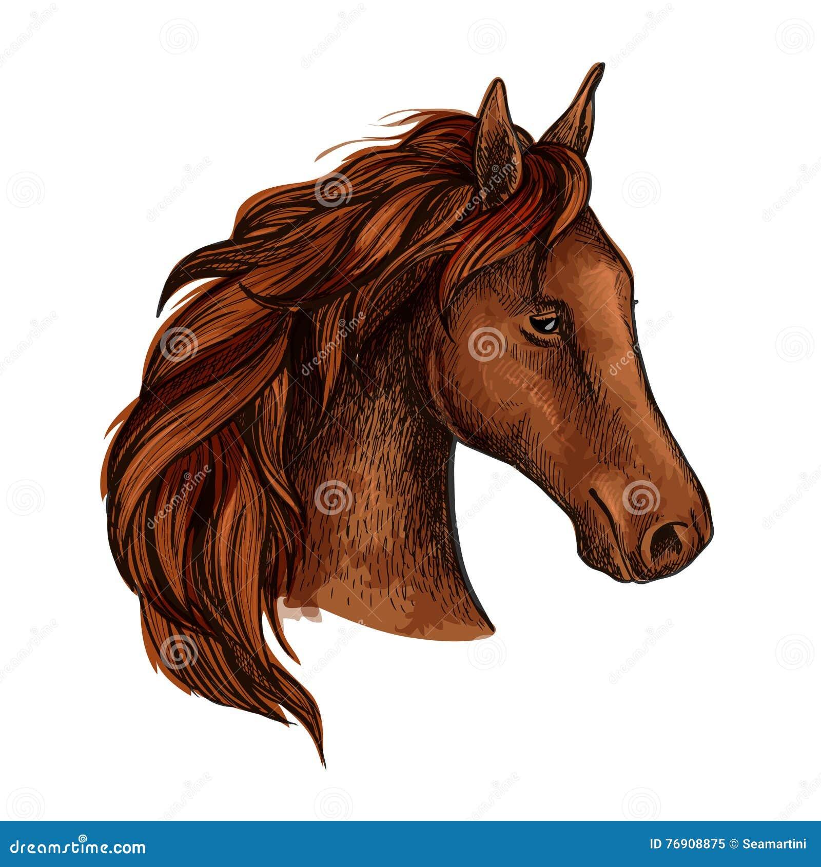 Эскиз головы лошади жеребца Брайна