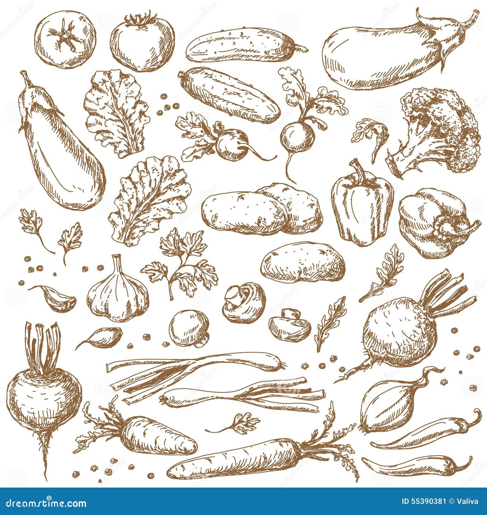Эскиз комплекта овощей