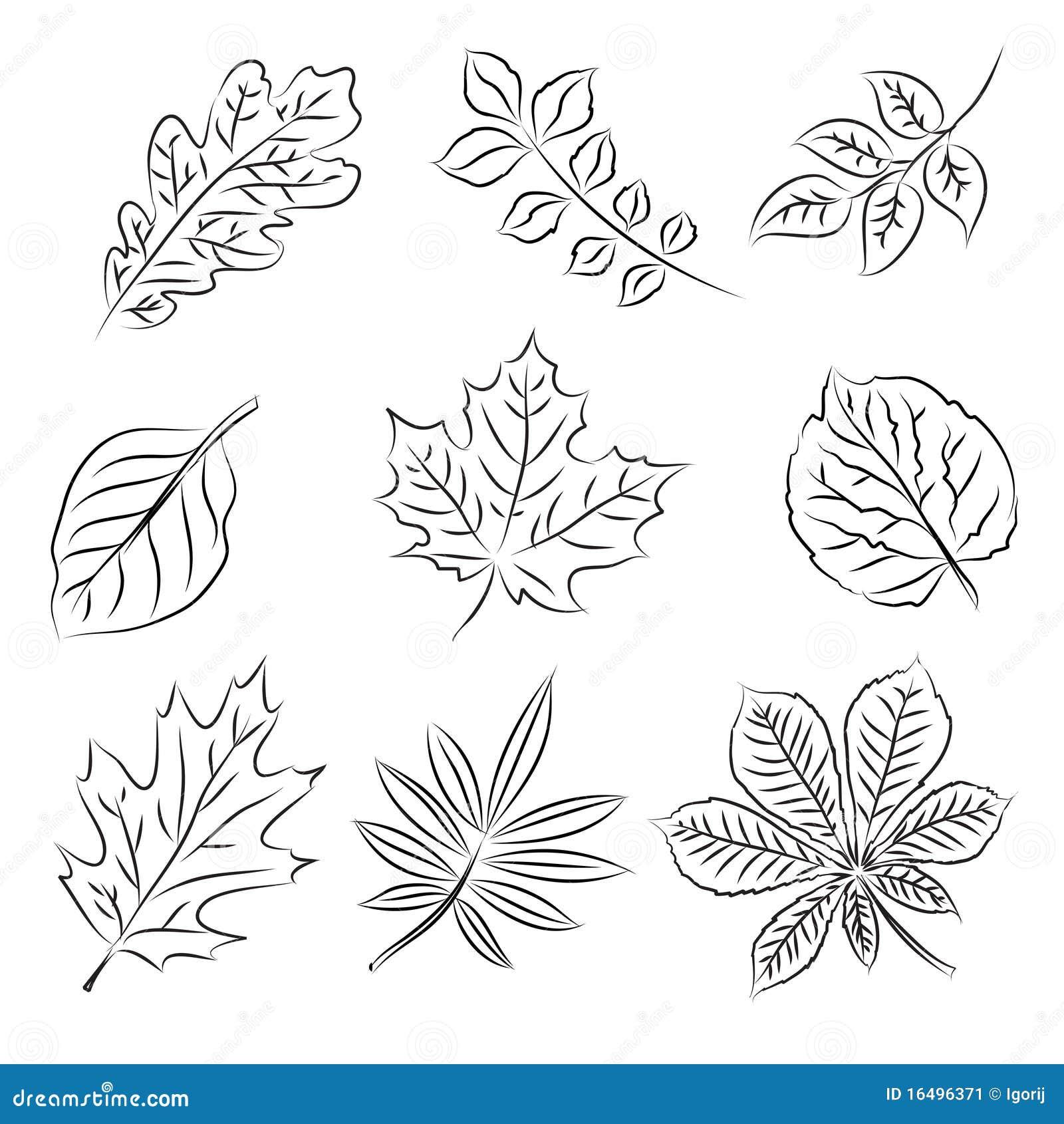 эскиз листьев осени установленный Иллюстрация штока
