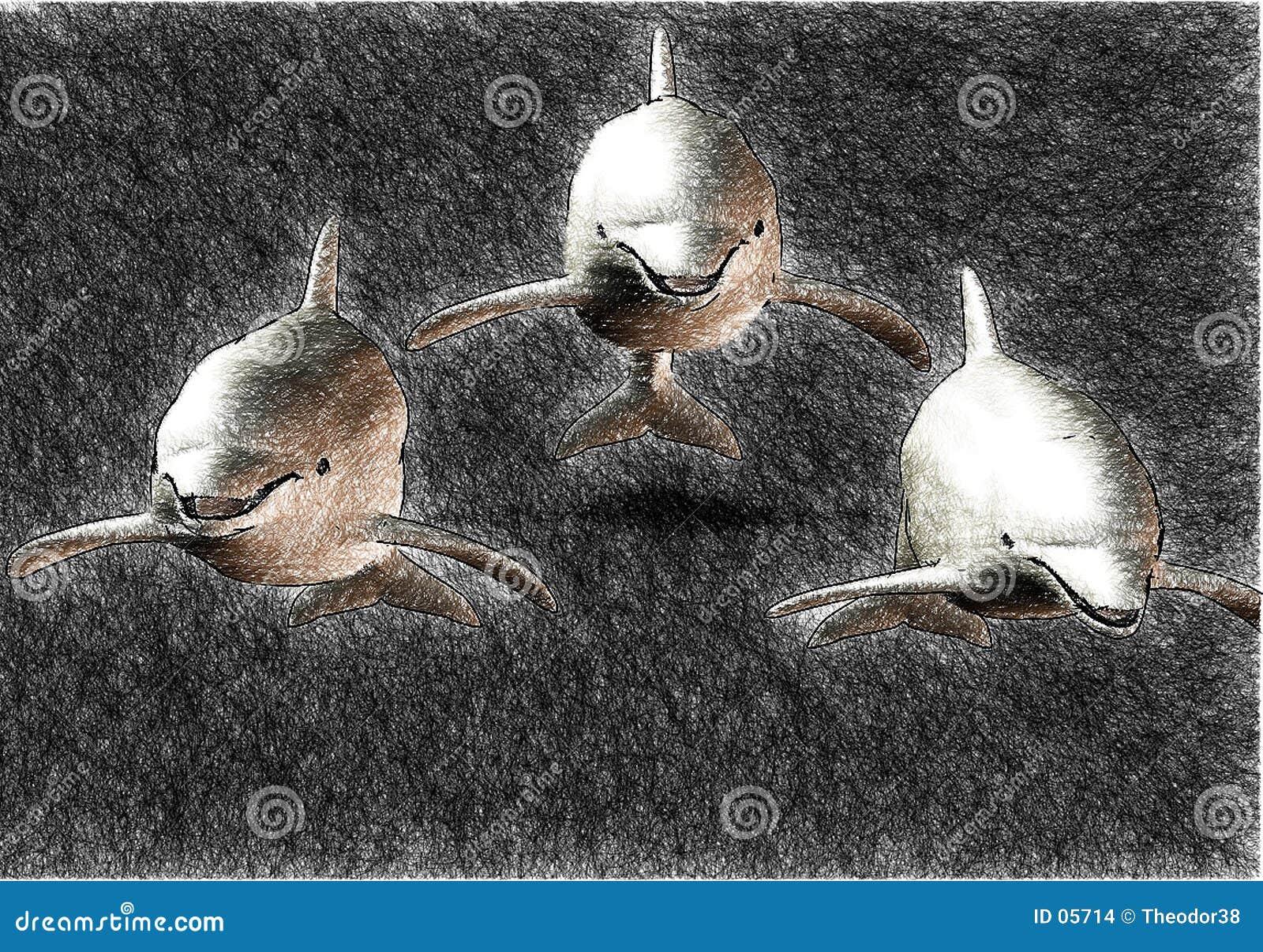 эскиз 3 дельфинов