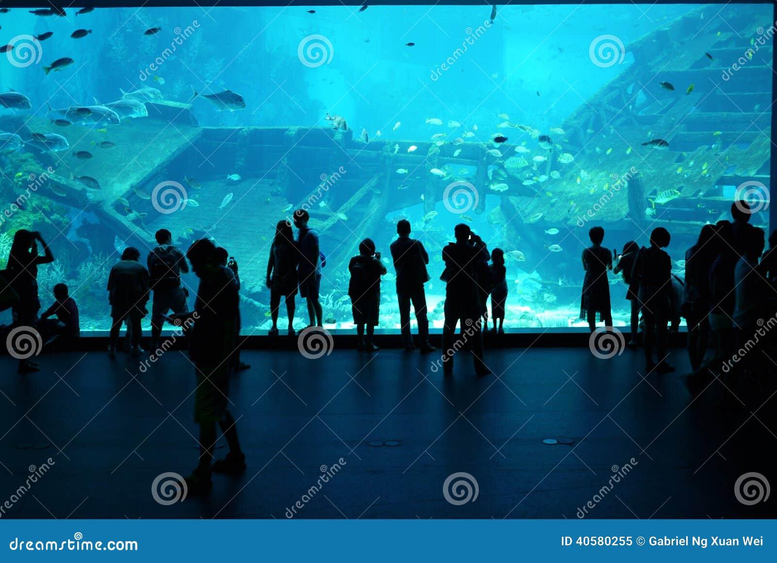 Этап просмотра аквариума моря Сингапура - 21-ое февраля 20