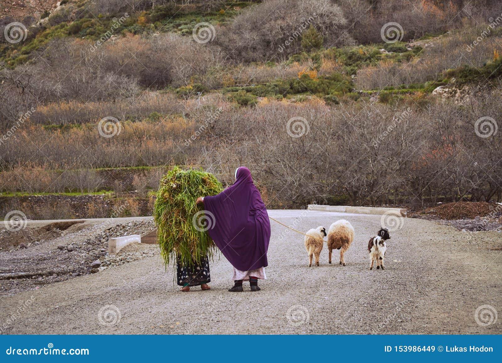 Этнические морокканские женщины нося траву на дороге