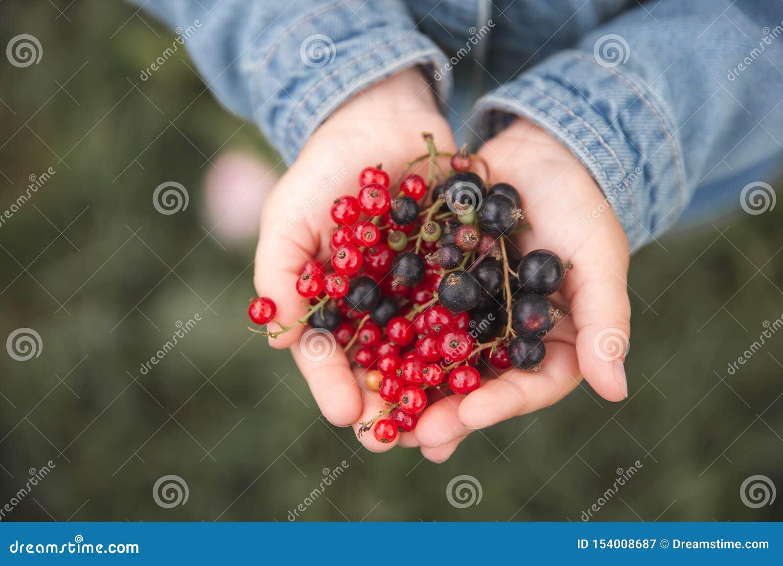 Ягоды и черные смородины в руках детей