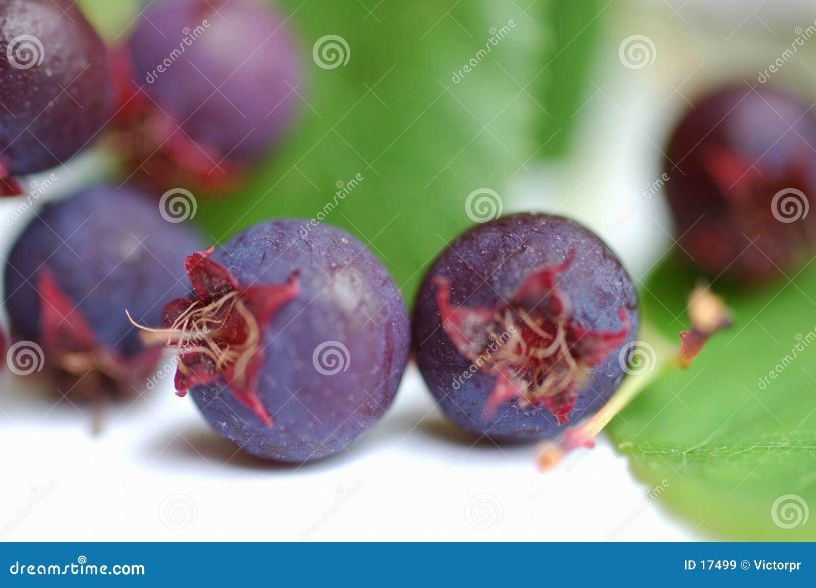 ягоды одичалые
