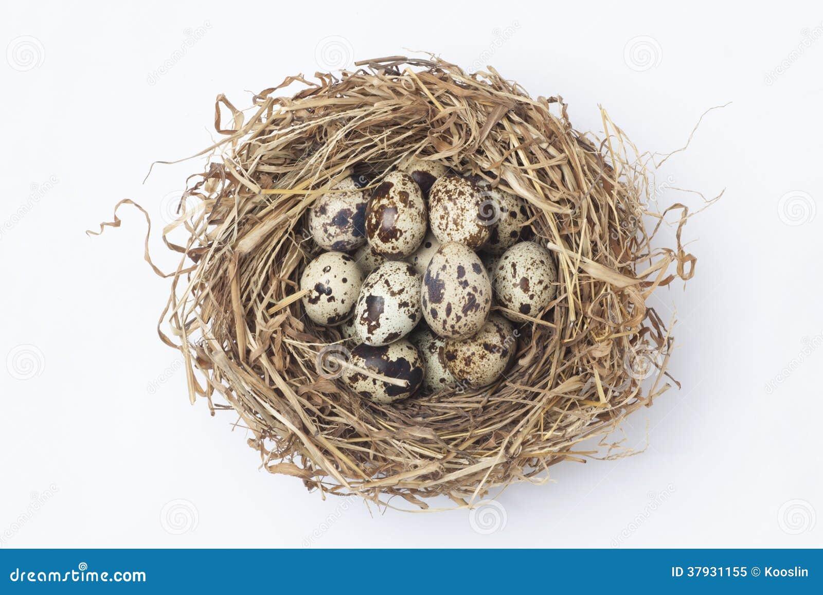 яичка триперсток в гнезде