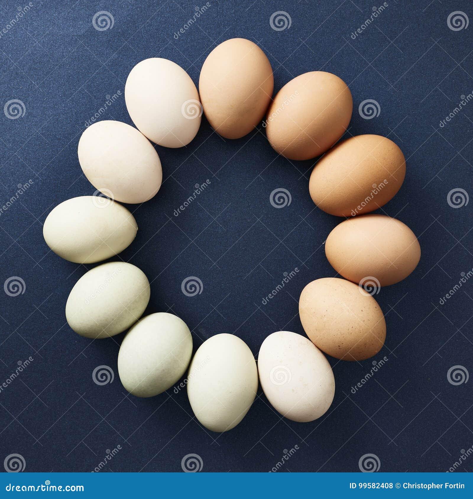 Яичка цыпленка помещенные в круге заказа цвета