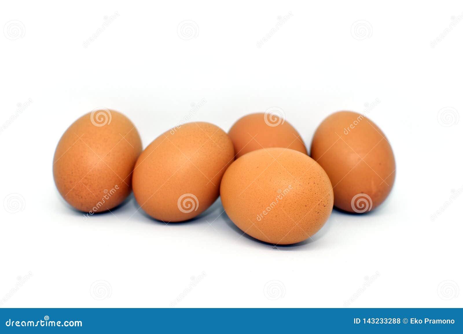 Яичко цыпленка изолированное на белой предпосылке