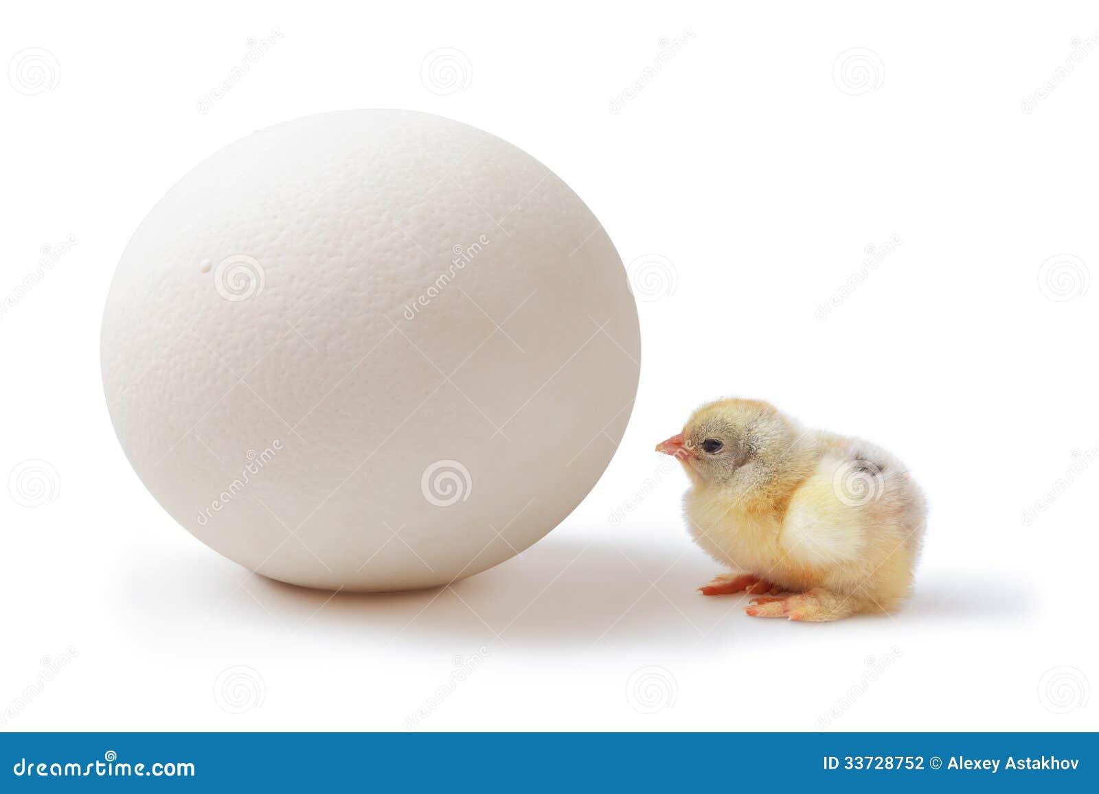 Яичко цыпленока и страуса