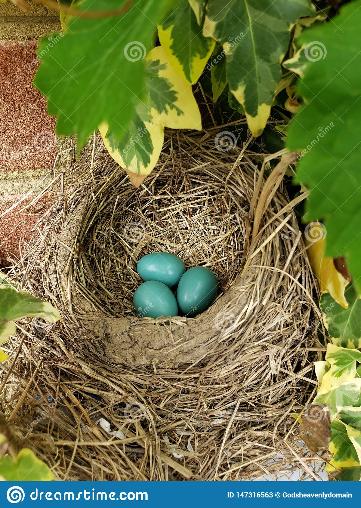 Яйца Робин