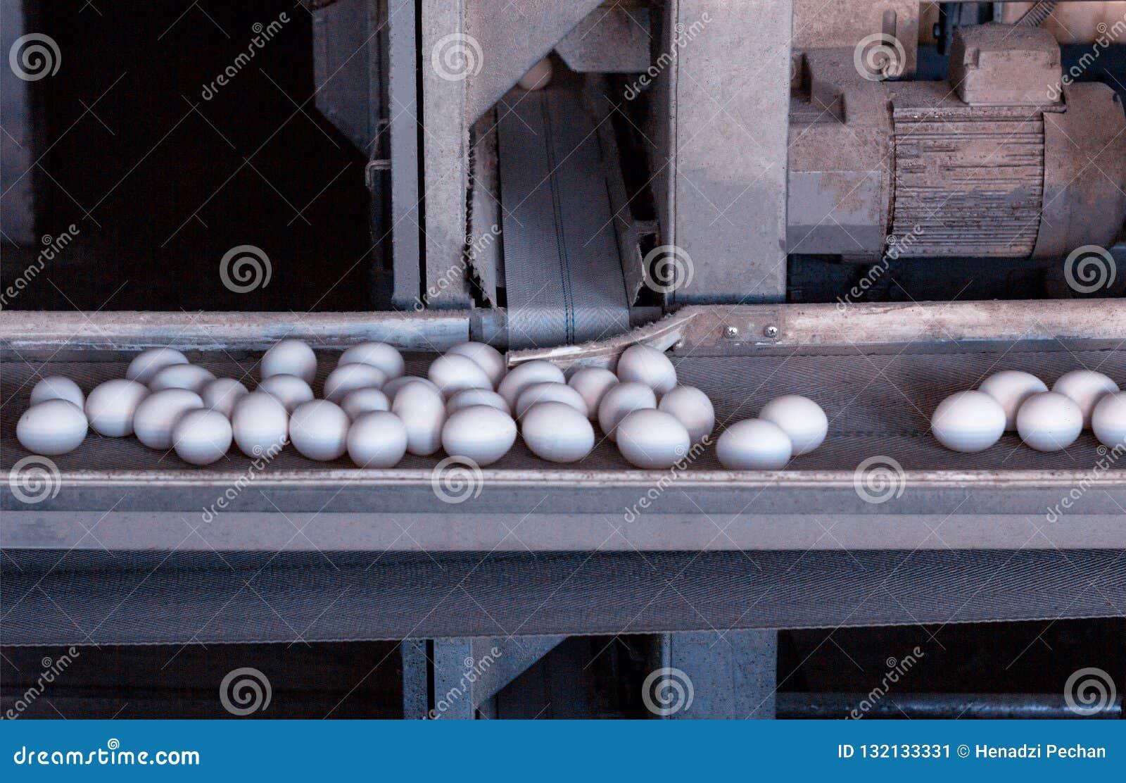 Транспортер для яйца цена зерна на элеваторах