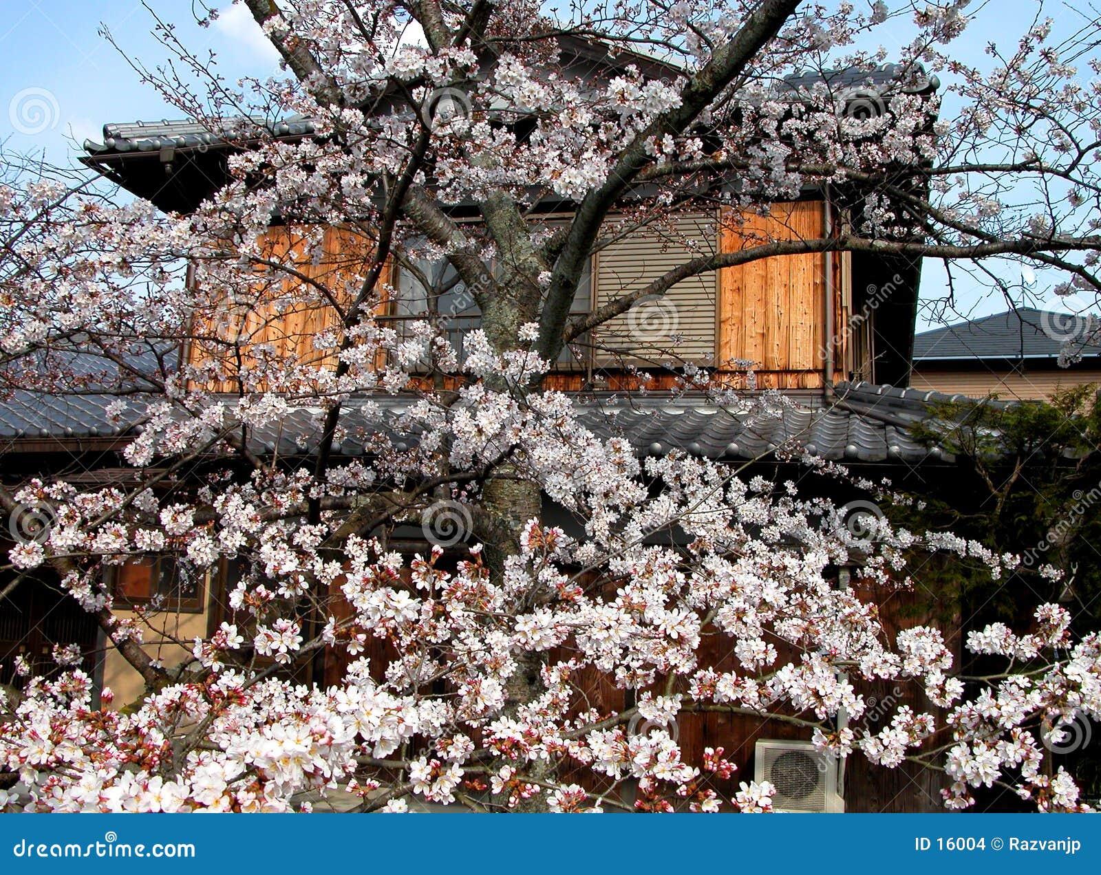 японская весна