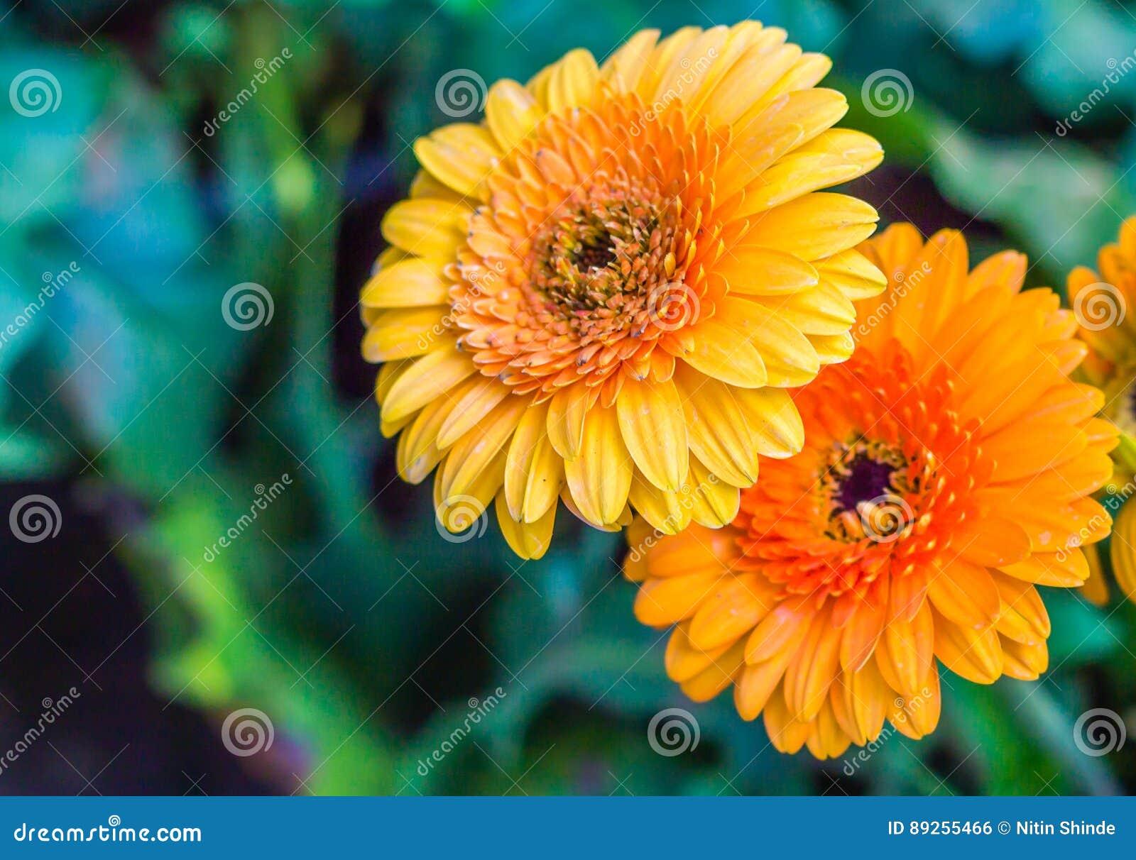Яркая свежего цветка красивая