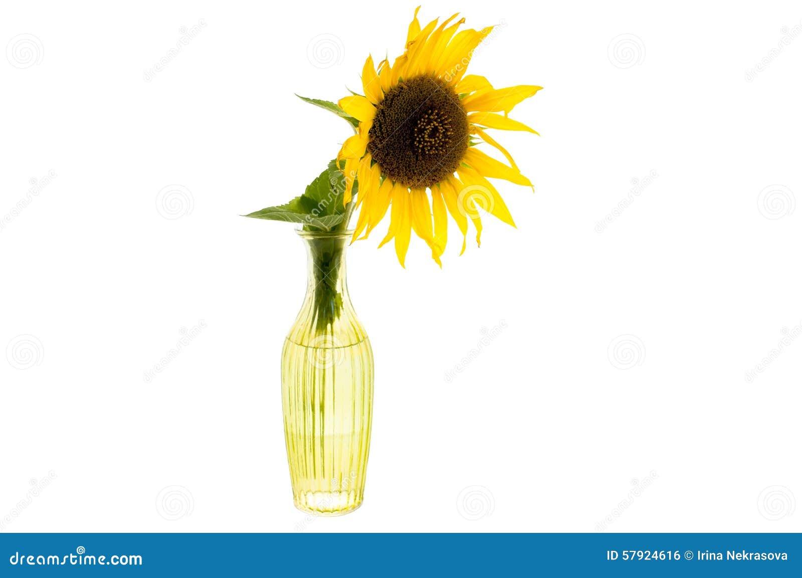 Яркий желтый цветок солнцецвета в стеклянной вазе