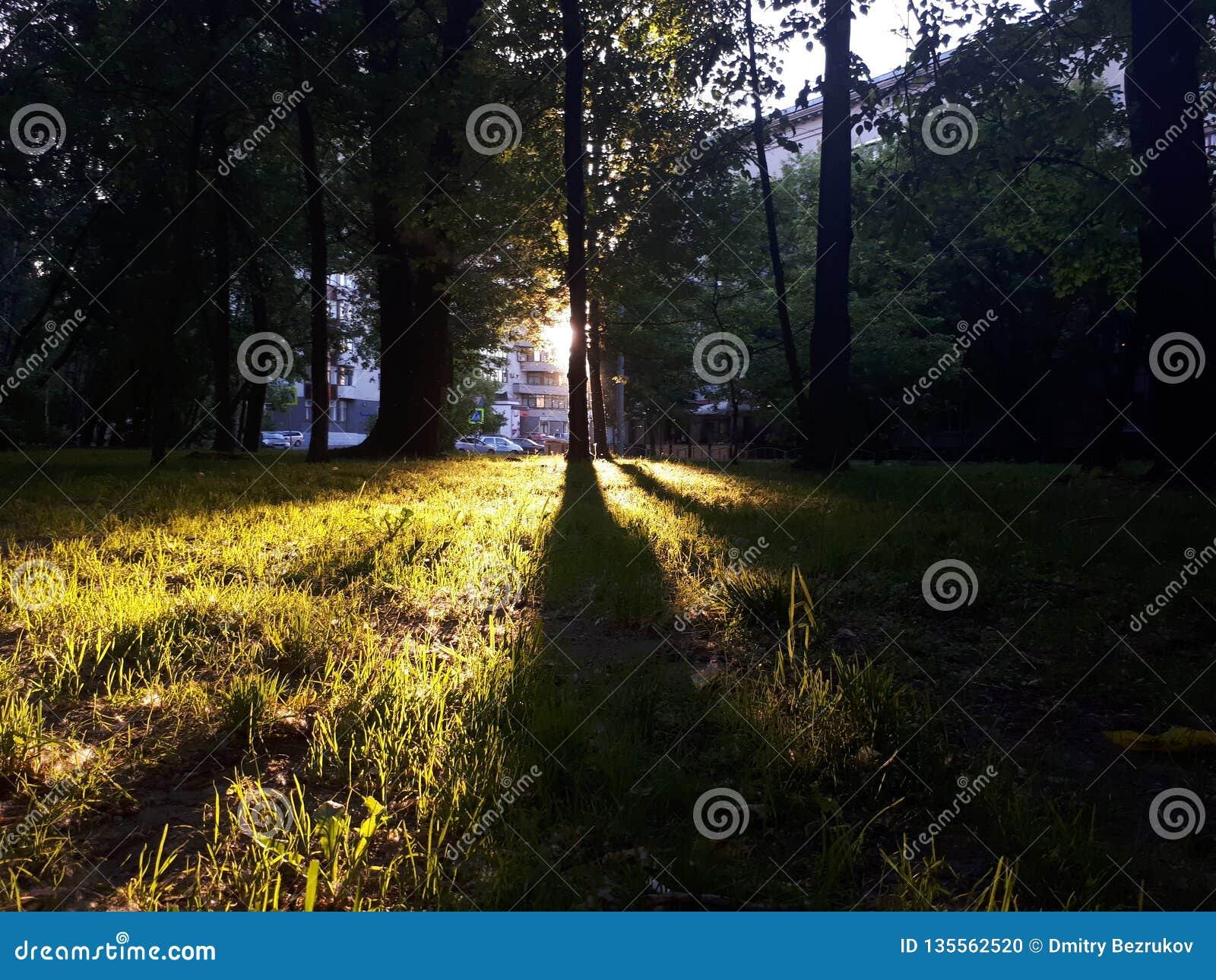 Яркий свет падая трава