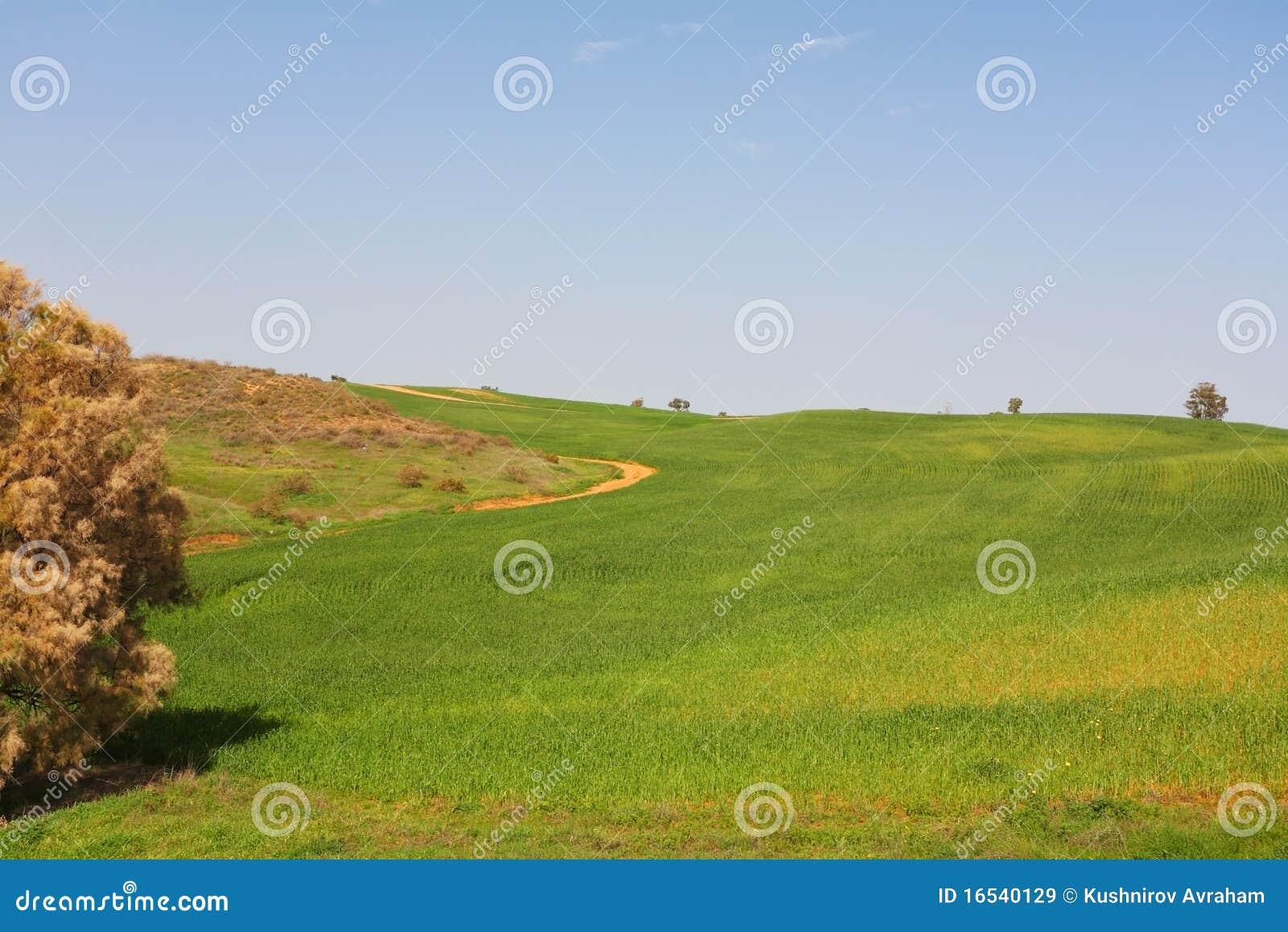 ясность fields зеленые небеса