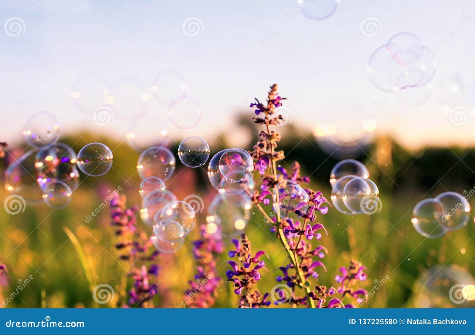 ясный зеленый луг с розовыми цветками и пузырями мыла ярко shimmer и лететь в воздух на заходе солнца