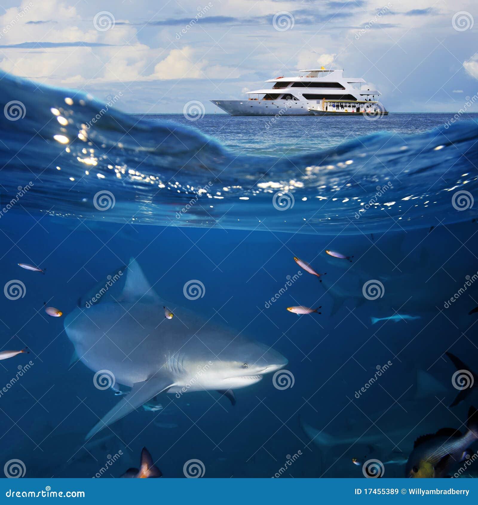 яхта акулы oceanview быка
