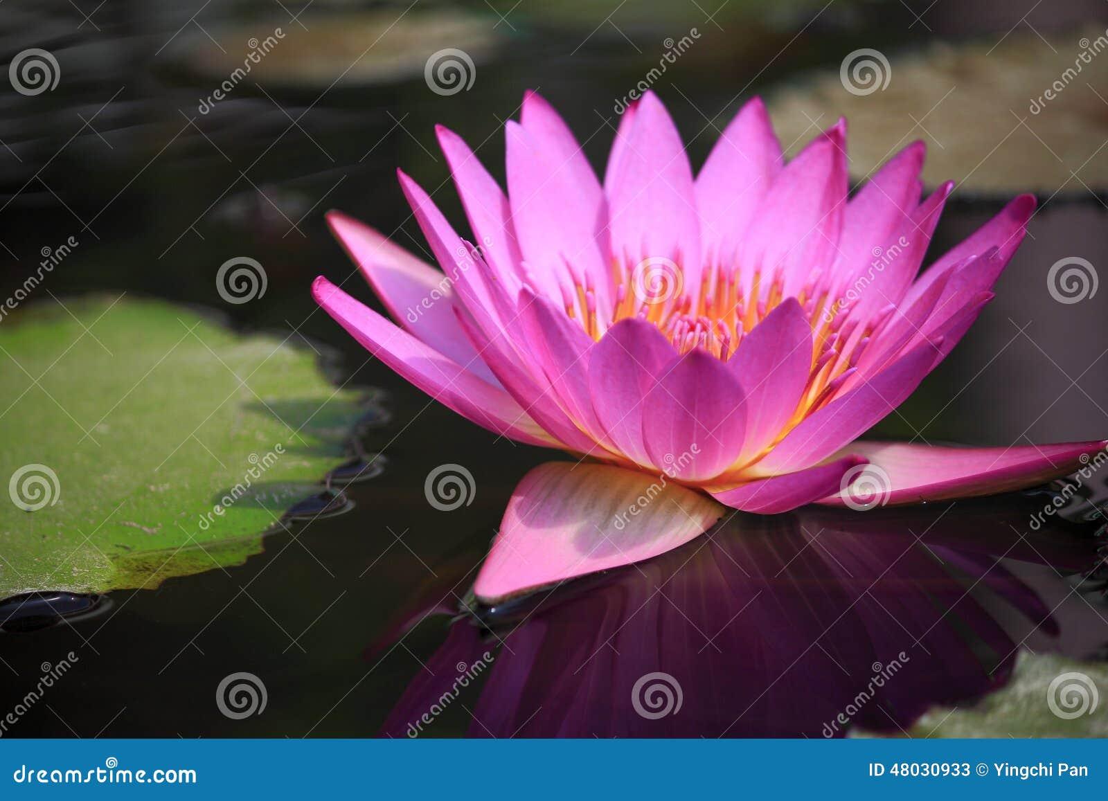 Ядр цветка конца-вверх