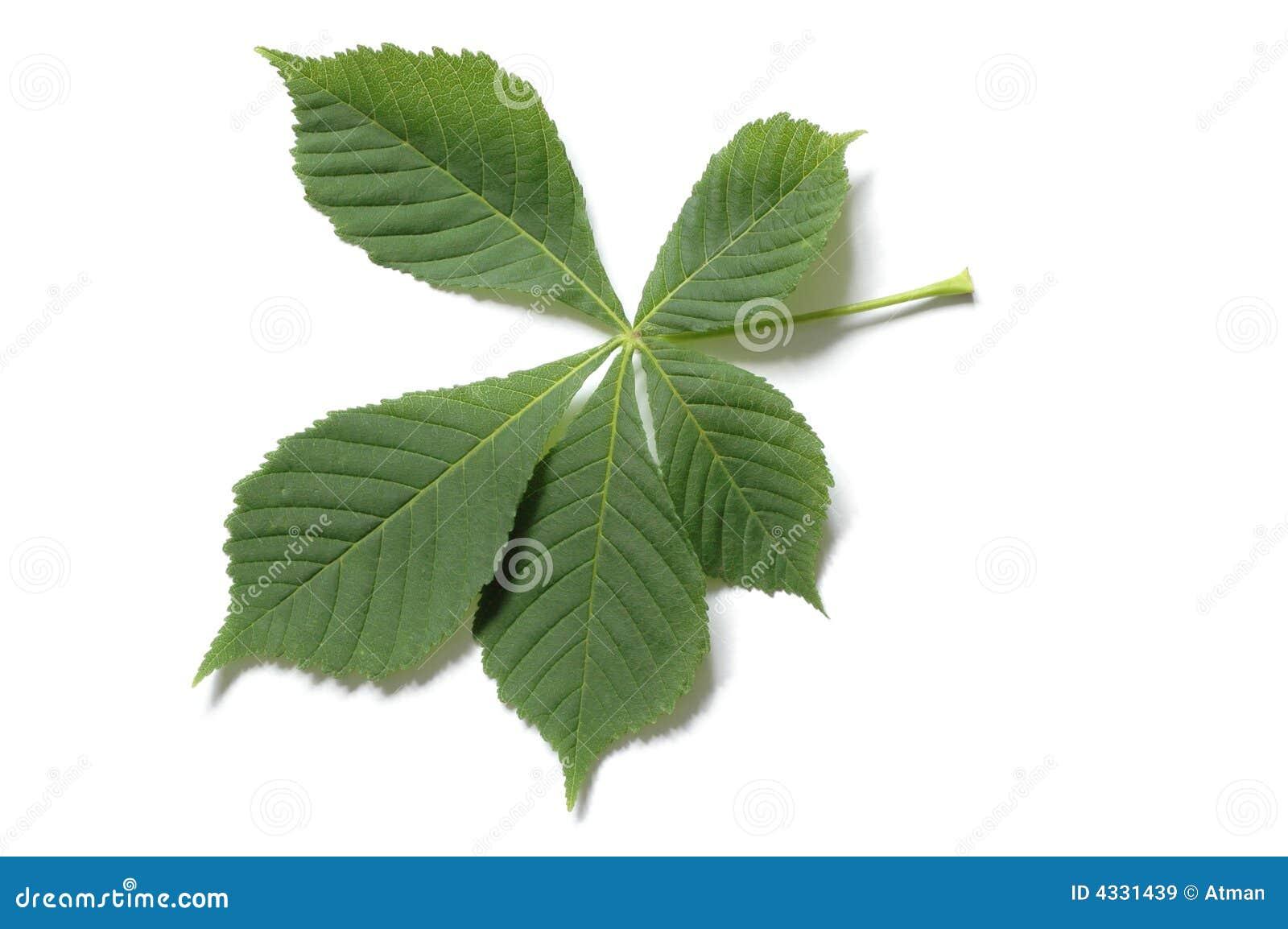 树叶有哪些相同结构