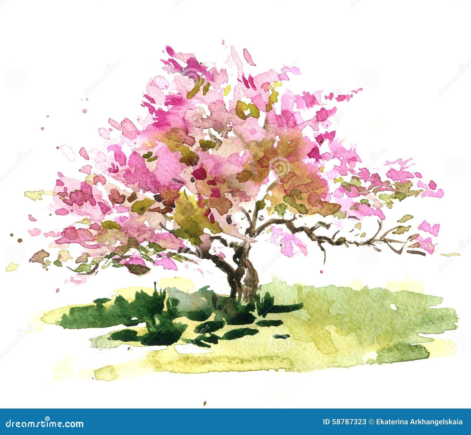 樱花树 库存例证 - 图片图片