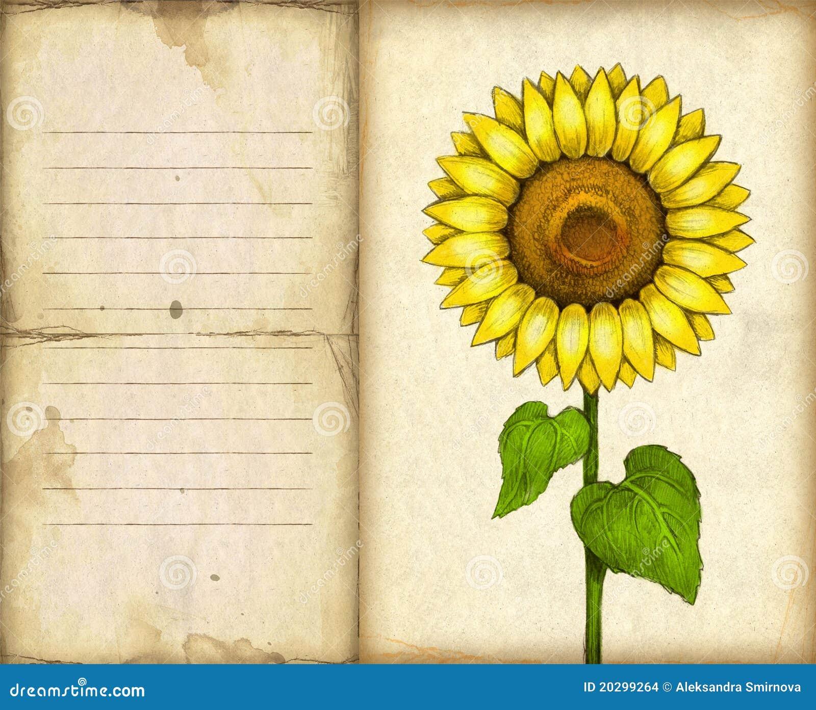 与向日葵图画的背景 库存图片