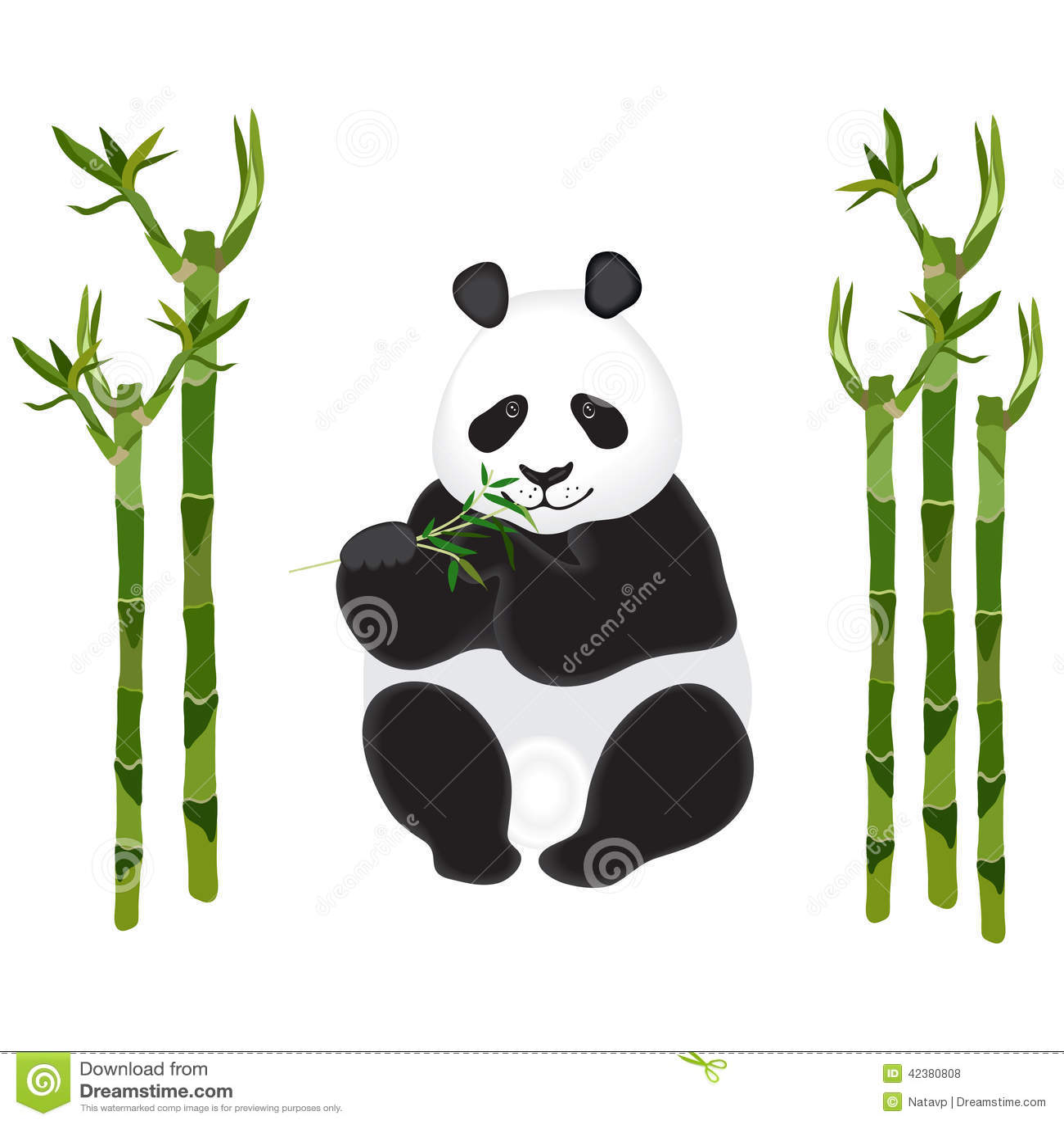 与竹子小树枝的熊猫在白色的