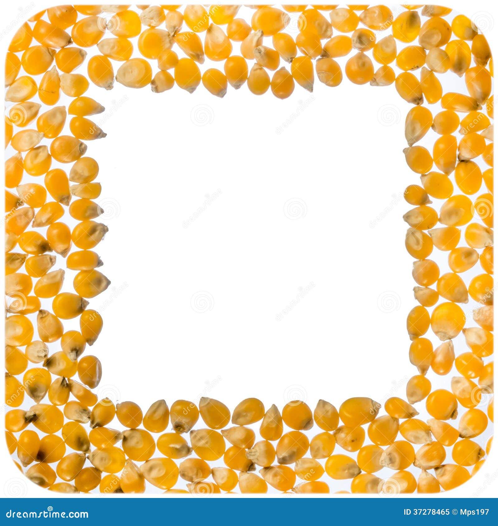 玉米花仁正方形框架