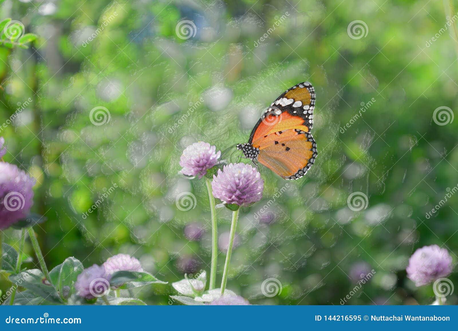 ‹En plastique d image†de style - ‹d †étroitement de papillon sur la fleur, fond de nature
