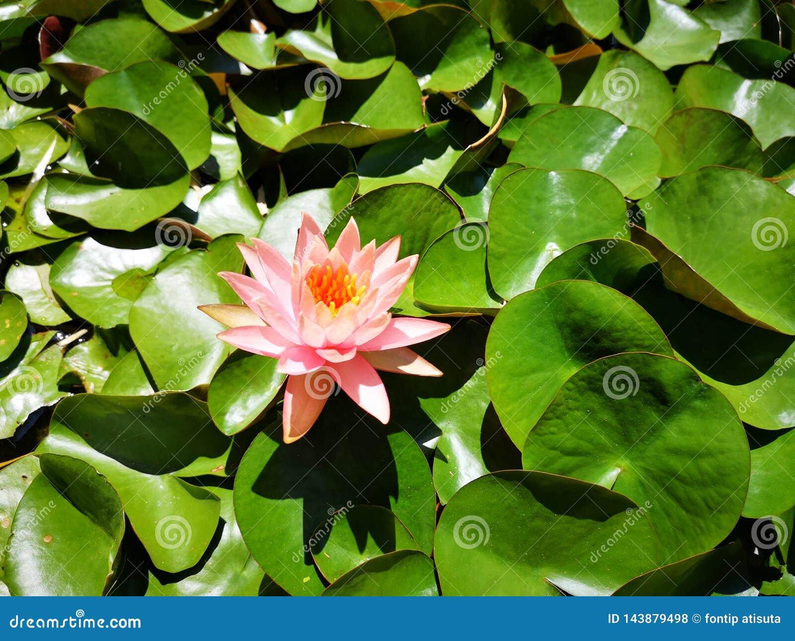 ‹För flower†för ‹för tropical†för ‹för color†för ‹för rose†för ‹för pick†för ‹för †för ‹för plant†för ‹för waterâ€