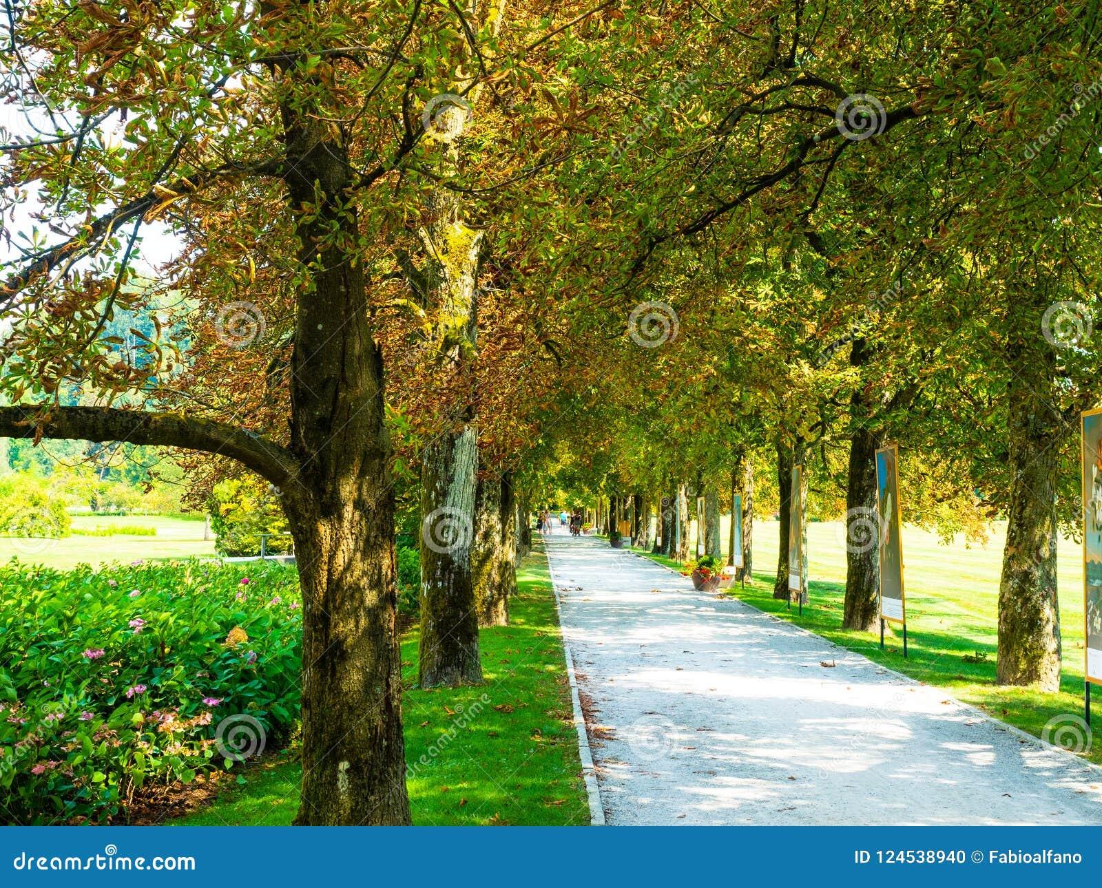 一个五颜六色的庭院的沿途有树的大道