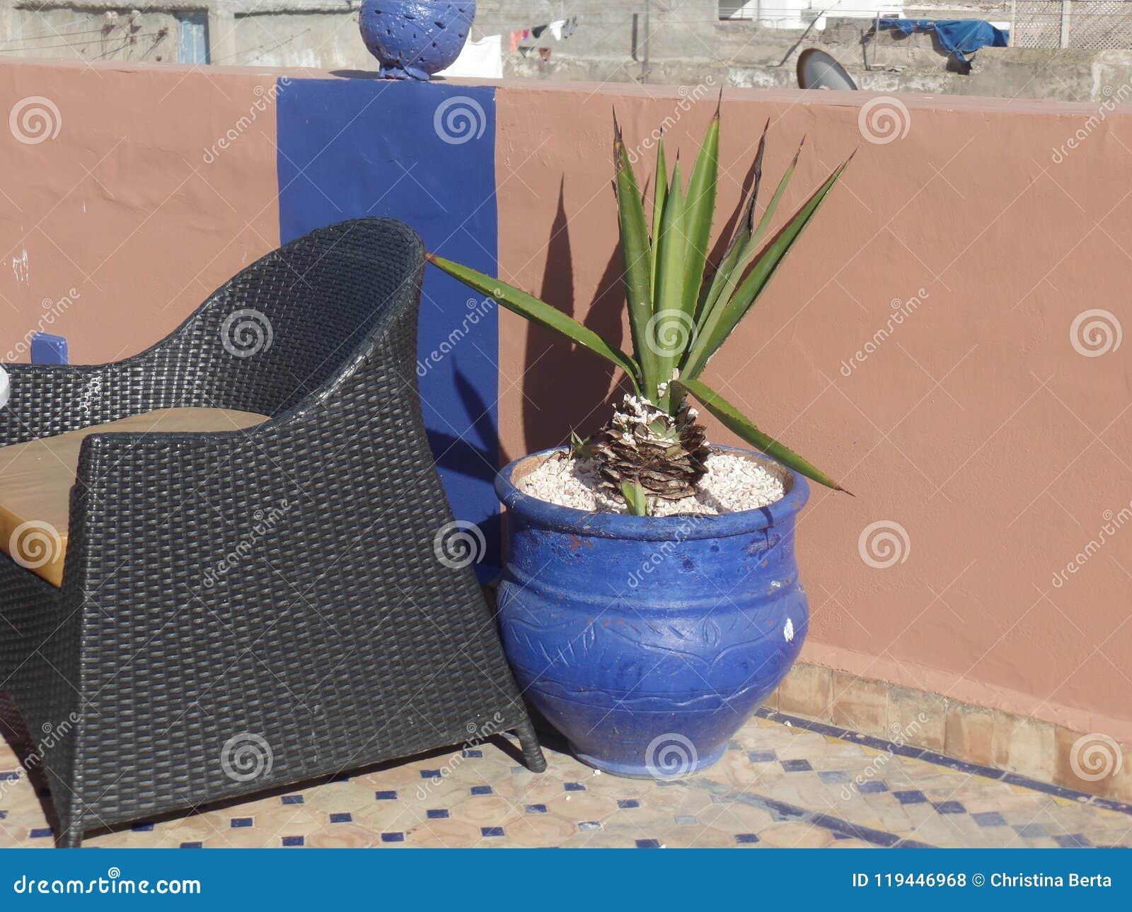 一个五颜六色的罐的仙人掌植物在摩洛哥屋顶大阳台
