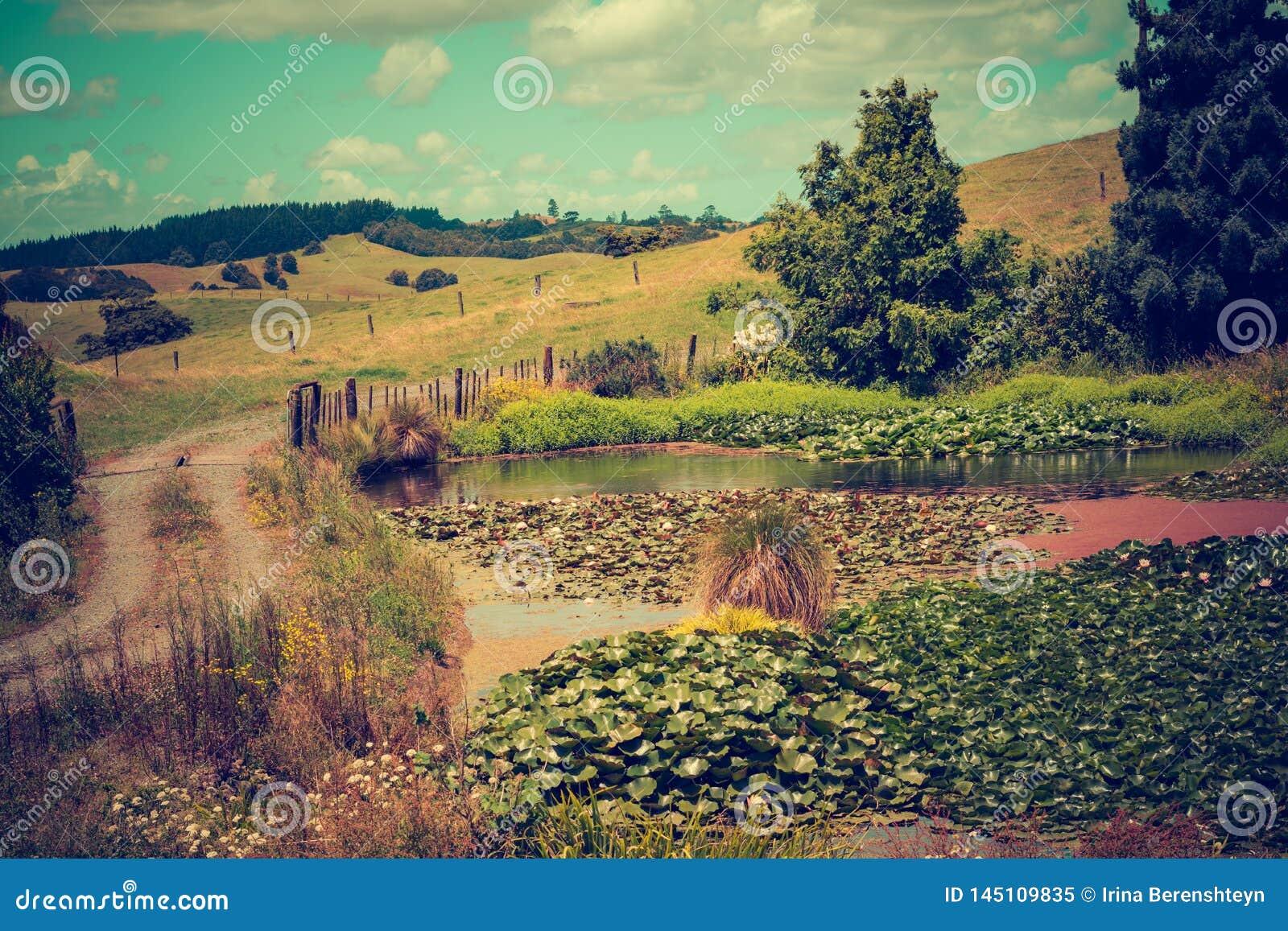 一个农村风景的葡萄酒照片与包缠往豪华的绿色绵延山的石渣路的过去百合池塘