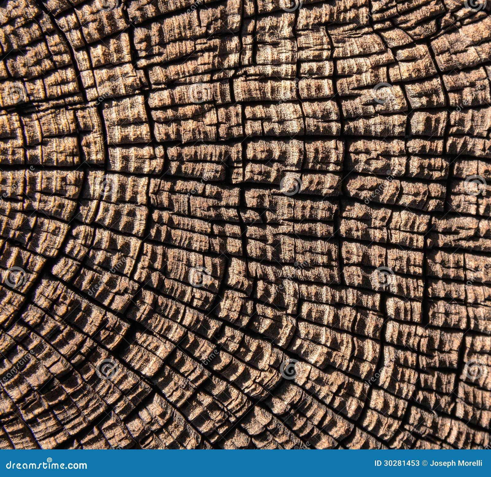 树干摘要背景
