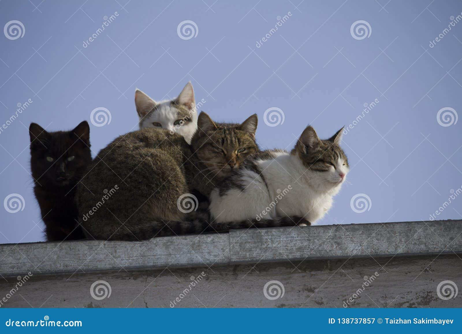 一个小组在屋顶看看的多彩多姿的猫照相机