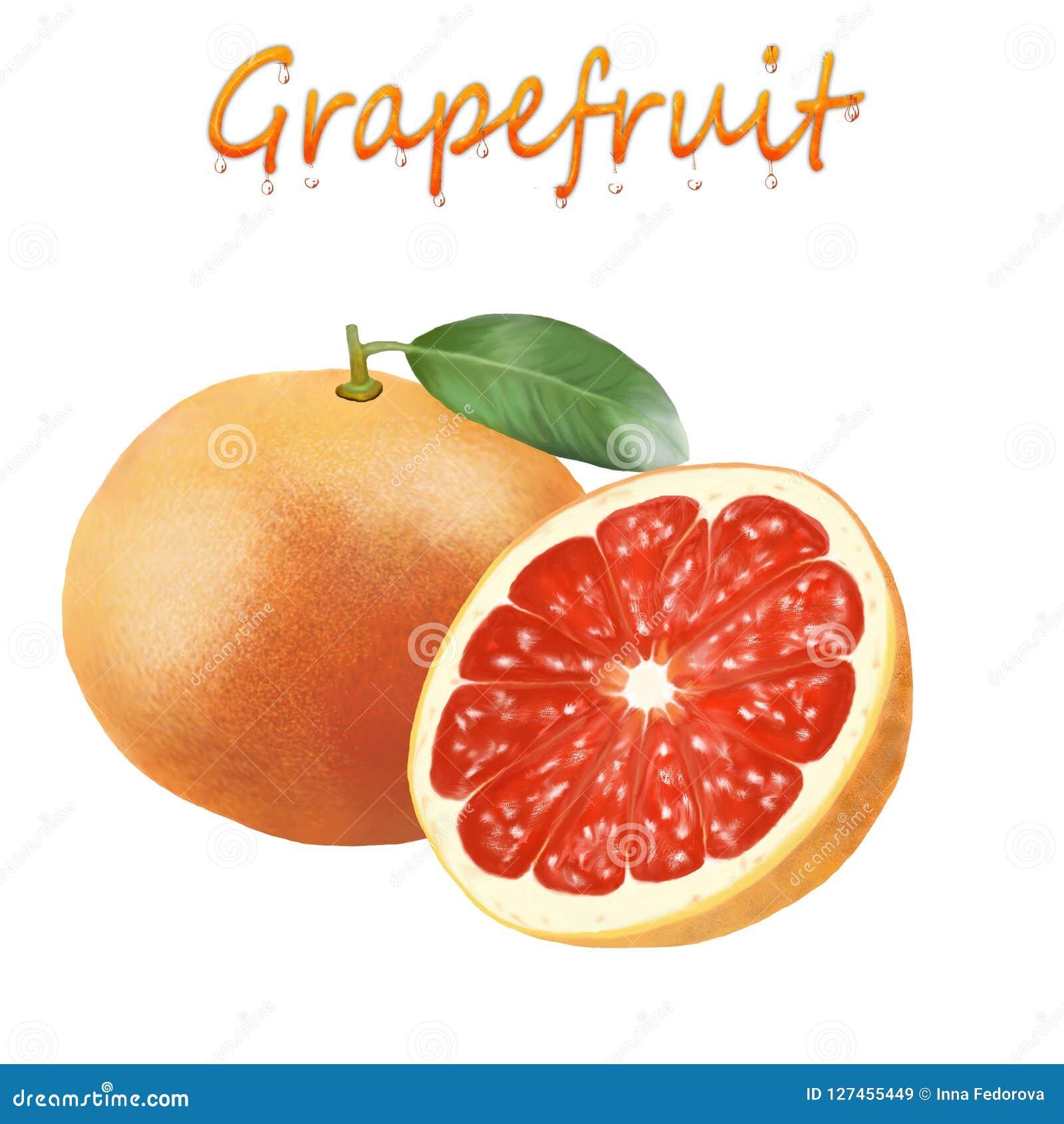 一个成熟葡萄柚的例证在白色背景的