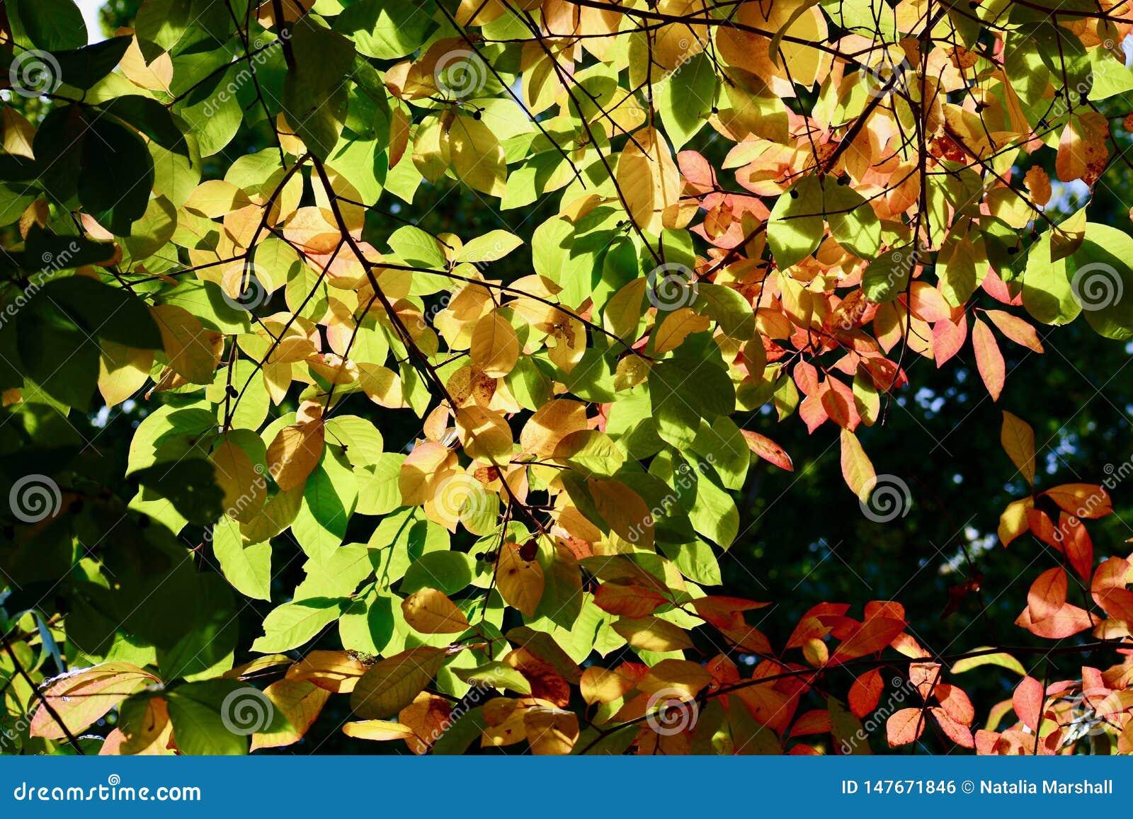 一个树枝,背后照明的特写镜头照片与红色秋叶的