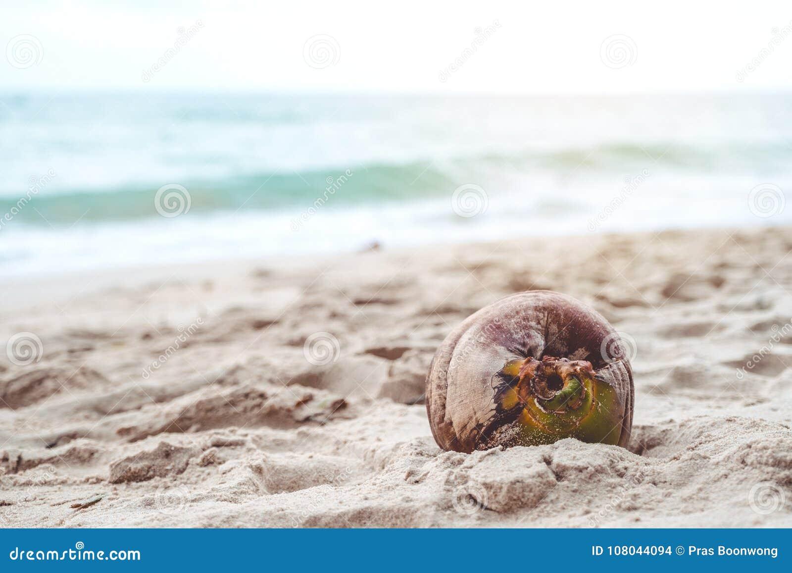一个椰子的特写镜头图象在海滩的