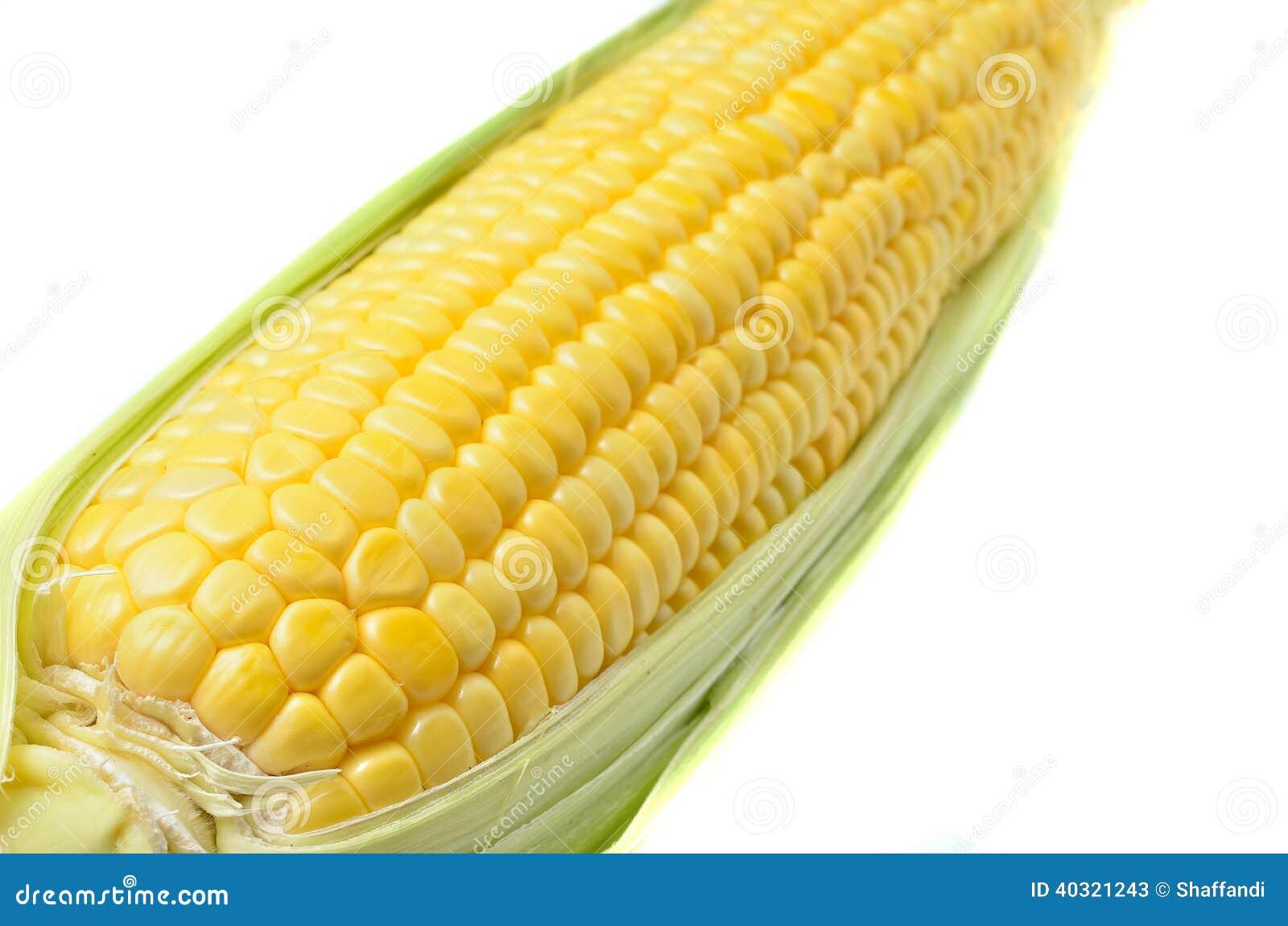 在白色背景隔绝的一个玉米穗.图片