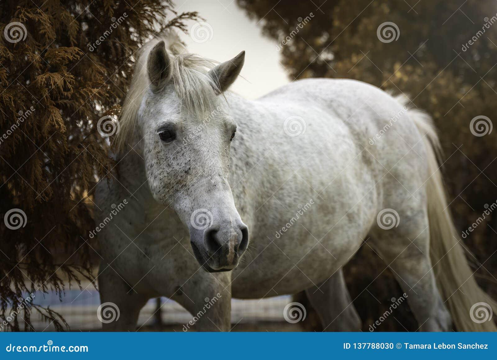 一个白马的画象在一个庭院里在秋天