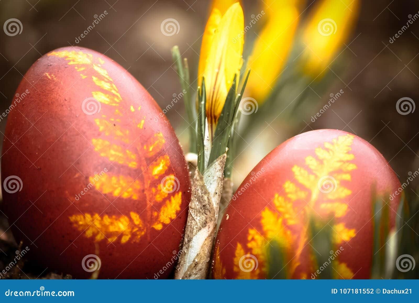 一个美丽,色的红色复活节彩蛋在后院 传统春天食物和节日