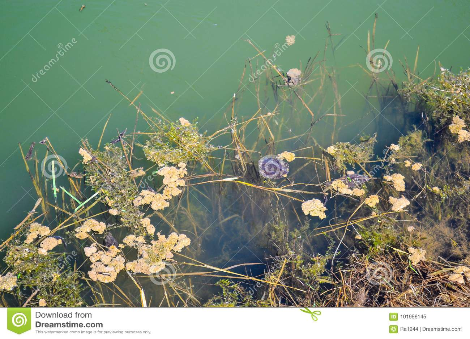 一个老长满的池塘的绿色水