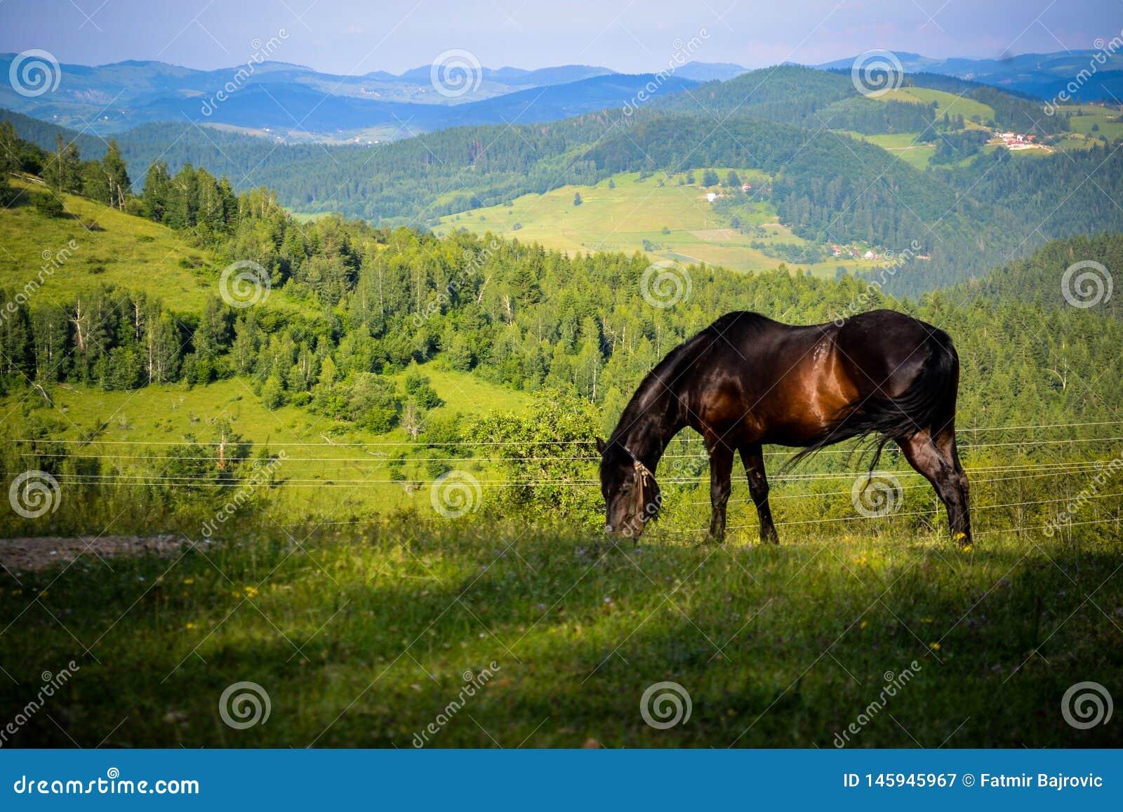 一个非常好和有趣的细节 一匹美丽的马在自然财富享用和自由哺养